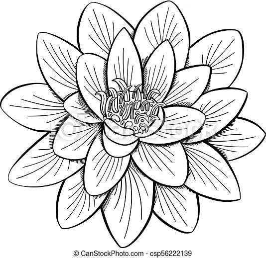 Lotus, waterlelie. Stijl, bloem, ets, houtsnee, lotus