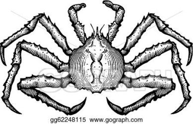 Drawing A black and white drawing of a king crab Clipart Drawing gg62248115 GoGraph