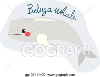 Vector Art Beluga whale Clipart Drawing gg102717420 GoGraph