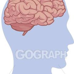 Brain Diagram Inside Wiring For Ignition Switch On Mercury Outboard Eps Illustration Human Body Part Head Vector