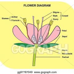 Flower Parts Diagram Corrosion Cell Vector Stock Of Anatomy Clip Art