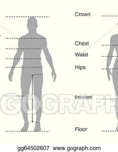 Women body measurements chart also thevillas rh