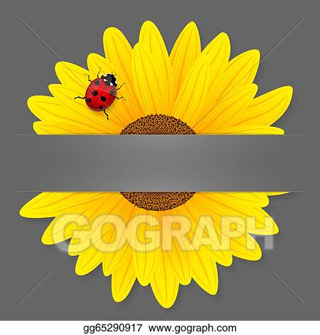 vector art - sunflower and ladybird