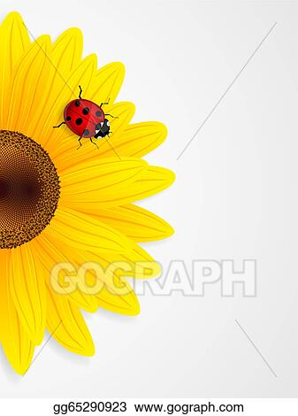 stock illustration - sunflower
