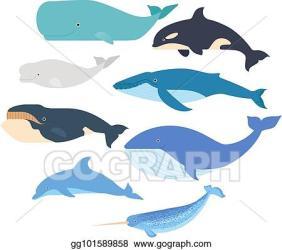 Realistic Beluga Whale Drawing