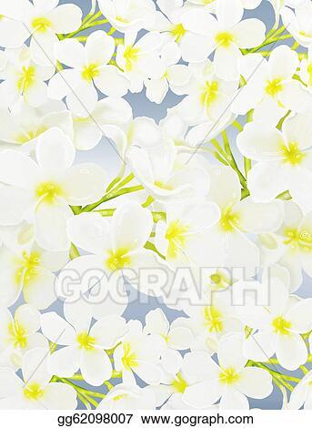 Plumeria Clipart : plumeria, clipart, Clipart, White, Beauty, Plumeria, Frangipanis, Stock, Illustration, Gg62098007, GoGraph