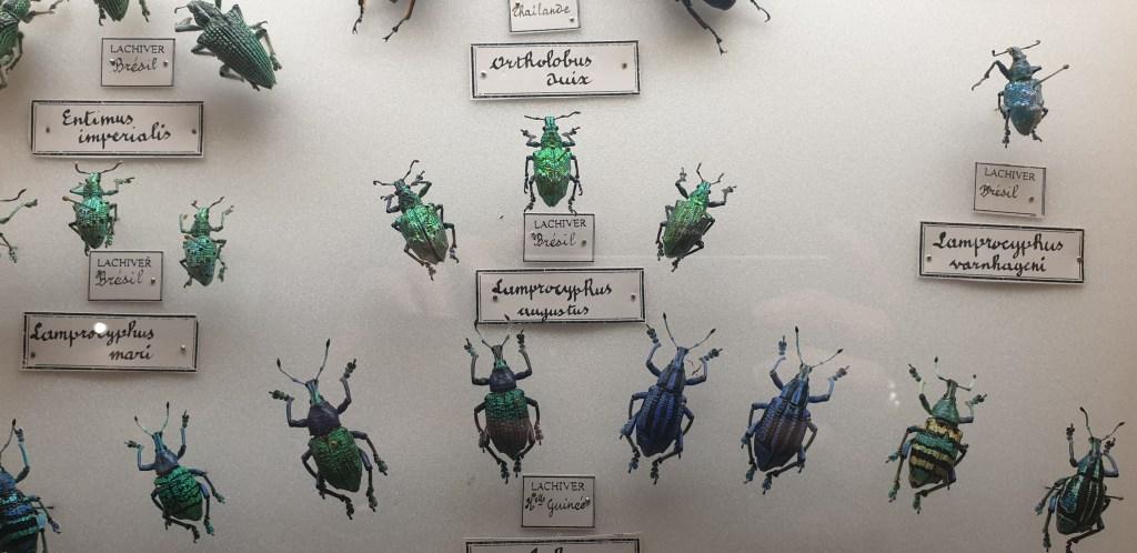 Maison de la Faune - insectes