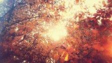 Sunny-Autumn-by-Joel-Heaps