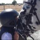 caballos2_mini2