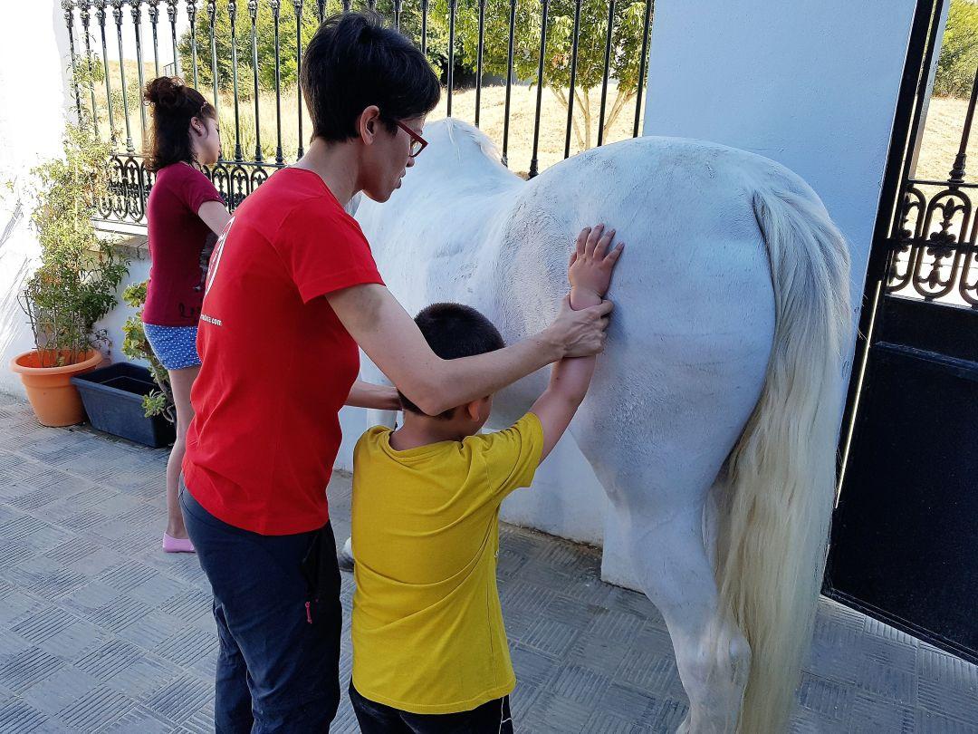 Labores de cepillado a un caballo en Terapia La Herradura.