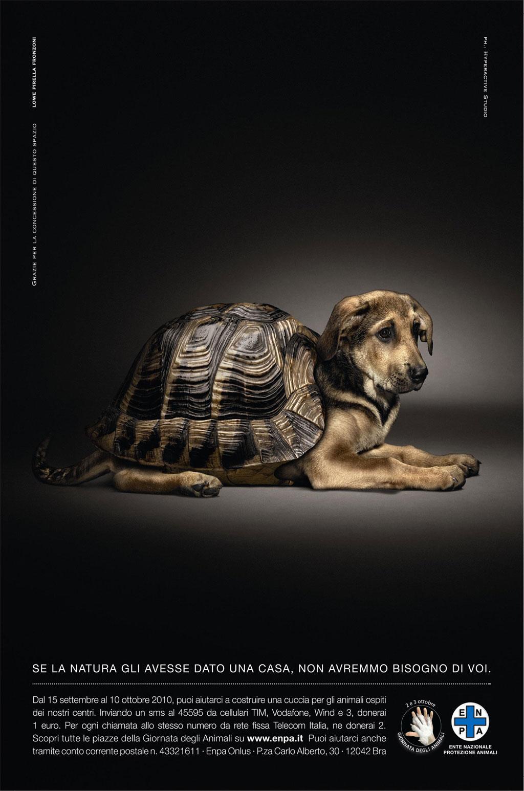 protezione animali  Comunicazione Sociale