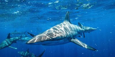 Isprambiente-squali