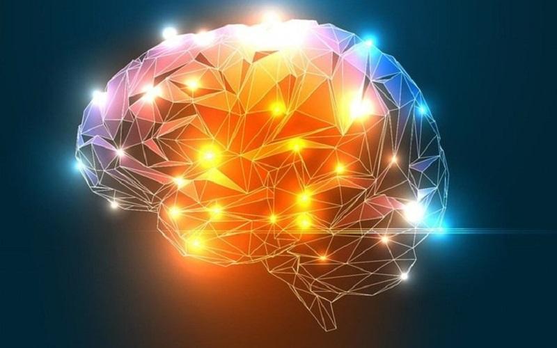 [Imagen: El-cerebro-se-ilumina-como-un-%C3%A1rbol...C500&ssl=1]