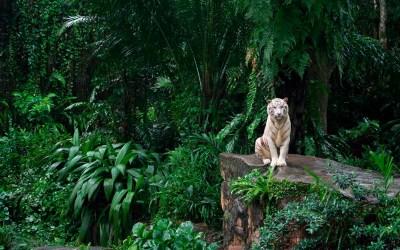 El poder de la naturaleza en la obra de Kipling