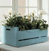 caja fruta plantas1