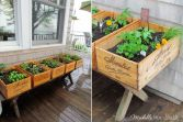 caja fruta plantas2