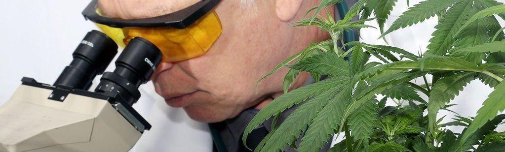 Medical Marijuana Compliance