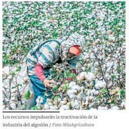 Cartera del agro pone en marcha el incentivo para cultivar algodón