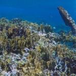 INAH 2 - Hallan en Quintana Roo un velero que data de finales siglo XVIII
