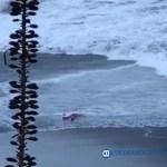 ahogado en playas - Localizan cuerpo flotando en playas de Manzanillo