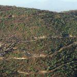 minas australia - Noticias al momento
