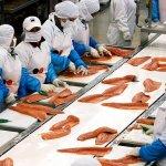 112950596 gettyimages 158079589 - Coronavirus en China: por qué las autoridades de Pekín culpan al salmón del nuevo brote de covid-19