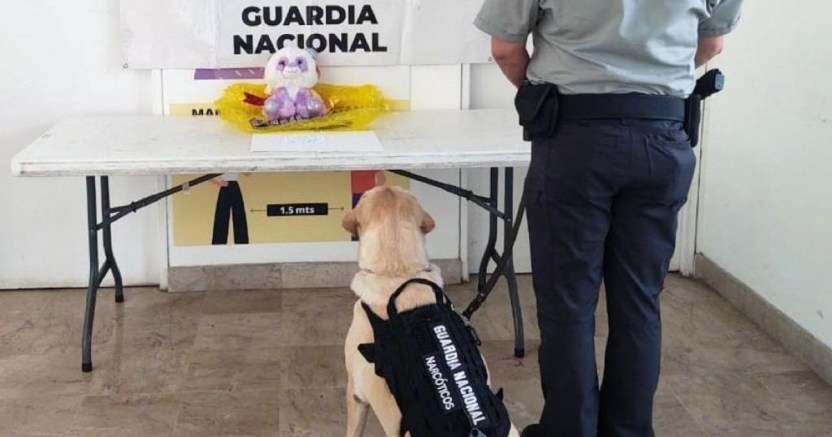 edxnxpewsaicusp crop1595755427361.jpg 673822677 - Como si fueran chocolates, GN localiza 500 pastillas de fentanilo en Aeropuerto de Culiacán