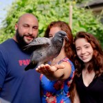 familia adopta paloma - Rescataron su huevo y decidieron criarla como una mascota. Esta paloma ya es parte de la familia