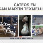 """loco tellez tigre - FGE de Puebla catea propiedades de """"El Loco Téllez""""; asegura un tigre y otros animales exóticos"""