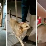 perro3abandonado - Joven adoptó a perrito sin hogar que ignoraban en las calles. Agradeció el cariño de inmediato