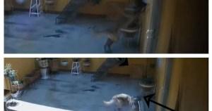 perro vidente crop1594804363721.jpg 673822677 - Perro se asusta al ver un fantasma y es grabado en video