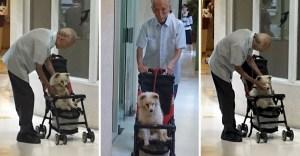 portada anciano lleva viejo perro veterinario carro bebe - Anciano lleva a su viejo perro al veterinario en un carro de bebé. Se acompañan en sus últimos años