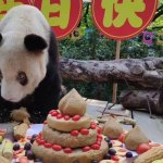 panda anciana mundo china - Xinxing, la osa panda en cautividad más vieja del mundo, muere a los 38 años; vivió más de 110 años humanos