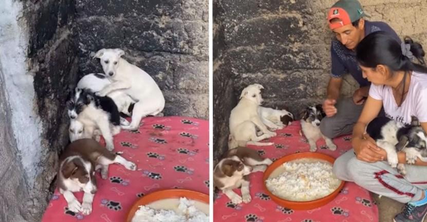 portada perros asustados - Cachorros rescatados lucen temerosos al llegar a su refugio. Su timidez es signo de sufrimiento