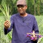 55 malasia dron tecnologia reciclaje pina fruta ciencia - En Malasia los científicos utilizan hojas de piña para hacer drones. Ciencia y naturaleza unidas