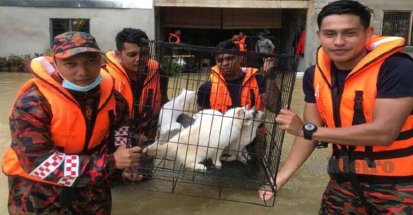 bomberos salvan casa de gatitos - Con el agua hasta la cintura: Bomberos salvan hasta 40 gatos de una inundación. Su vida también vale