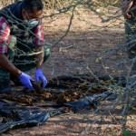fosa los pochotes 1.jpg 242310155 - Cierran fosa en Los Pochotes, Sinaloa, esperan resultados