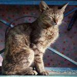 gato - Fiesta de cumpleaños de un gato deja 15 personas contagiadas de SARS-CoV-2 en provincia de Chile