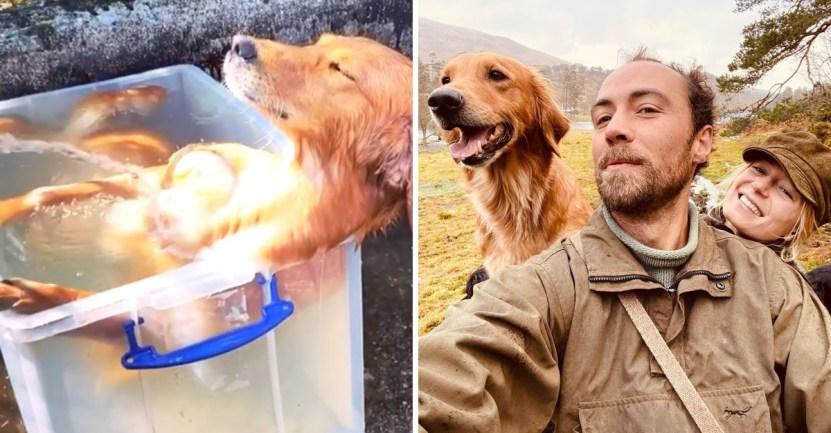 perro calor - Hermano de Kate Middleton le preparó una piscina improvisada a su perro. Así ya no sufrirá el calor
