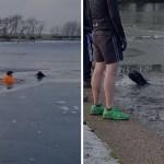perro rescate lago congelado - Un perrito se ahogaba en un lago congelado y no dudó en lanzarse al rescate. Fue su salvador
