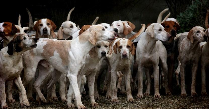"""perros - """"No son posesiones, son familia"""": Detectives recuperan unos 70 perros tras ola de robos en pandemia"""