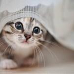 por qux ronronean los gatosx no solo lo hacen cuando estxn felices crop1610571894558 crop1611978126929.jpeg 242310155 - Cómo debo de cuidar a un gato recién nacido sin su madre