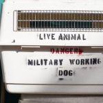 veterano rescata perros0010 - Veterano rescata a los perros afectados por la guerra en Afghanistan. Les concede otra oportunidad