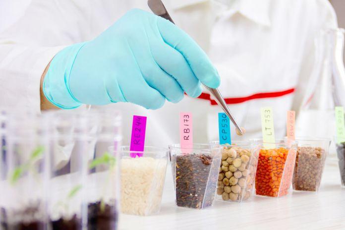 El negocio con las semillas modificadas geneticamente - El negocio con las semillas modificadas genéticamente