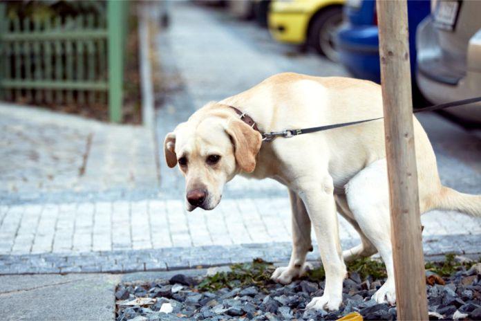 Que pasa si solo le das a tu perro comida para humanos - ¿Qué pasa si solo le das a tu perro comida para humanos?