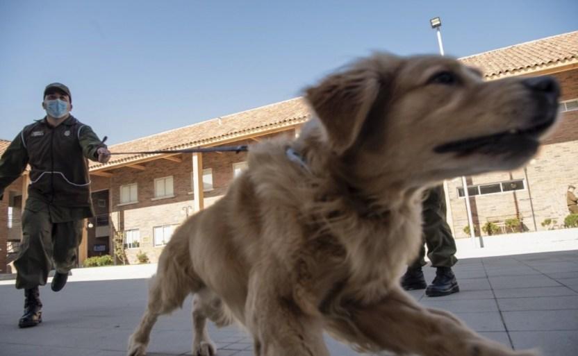 corea del sur harx pruebas de covid 19 a las mascotas de todo el paxs .jpg 242310155 - Corea del Sur hará pruebas de covid-19 a las mascotas de todo el país