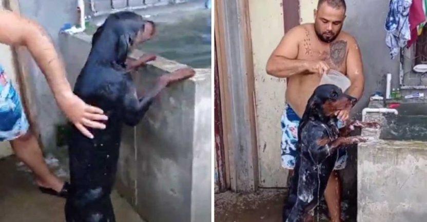 perrita frida banada en dos patas001 1 1024x533 1 - Obediente perrita se pone en dos patas para que su dueño la bañe. Espera tranquila a que él termine