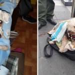 perro sol robo abuelo - Apareció el perrito del abuelo que vende en las calles de México. Creyeron que estaba abandonado