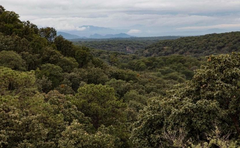 51008519353 4737f6a5d1 k crop1615147125814.jpg 242310155 - Bosque de la Primavera en Jalisco cumple 41 años siendo ANP