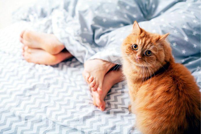 a tu gato le gusta dormir a los pies de la cama - La razón por la que a tu gato le gusta dormir a los pies de la cama